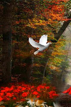 Чарівні історії нашого лісу